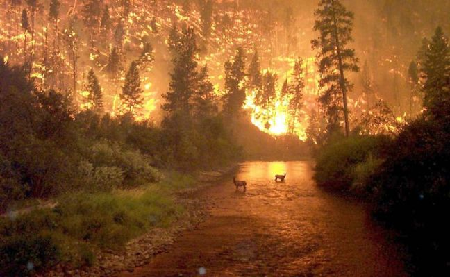 Montana Fire picture This was floating around on the Internet back when Yellowstone had the raging forest fires