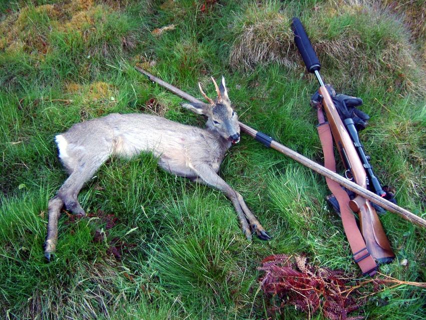 Click to view full size image  ==============  Roe buck yearling He was a hooligan