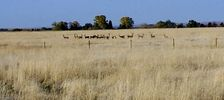 oct_19__2006_deer_in_field_web.jpg