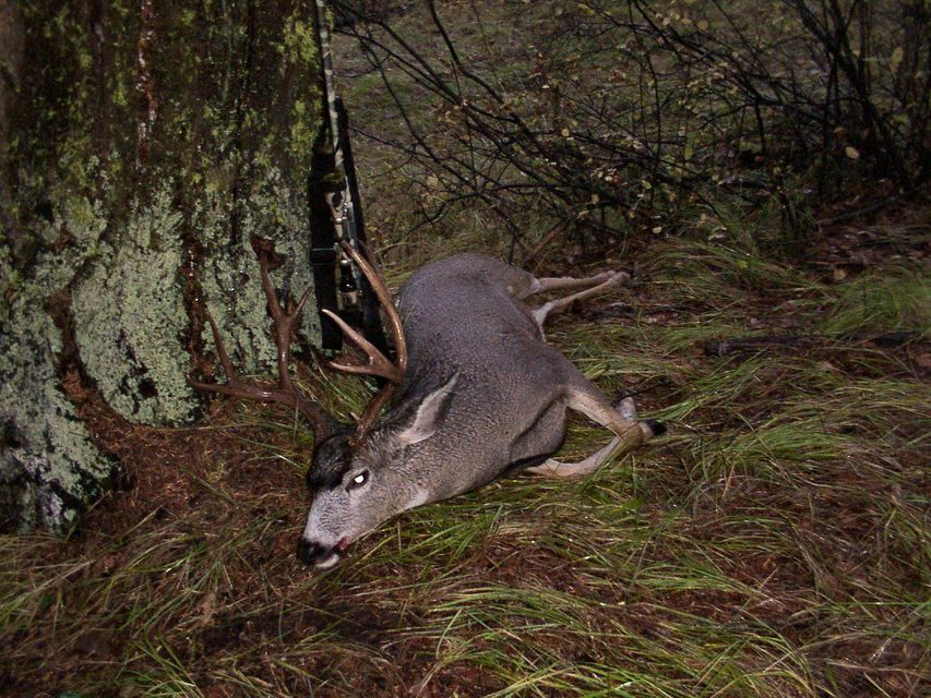 Click to view full size image  ==============  4X4 Mule Deer 2004 Cle Elum, WA area is my favorite area to hunt. This oldie was taken point blank after sitting in the rain all day, stood up and there he was just over the hill.