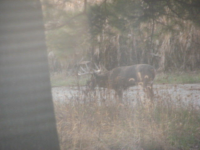 Look who came for breakfast.  Pic from dining room window!