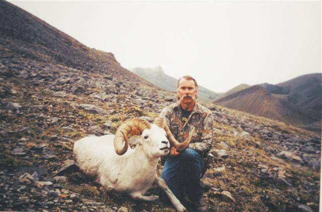 Dall Ram  MacKenzie Mountains, NWT, Canada