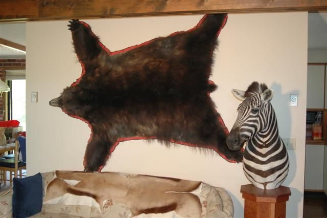 Living room, east wall Black bear and Zebra