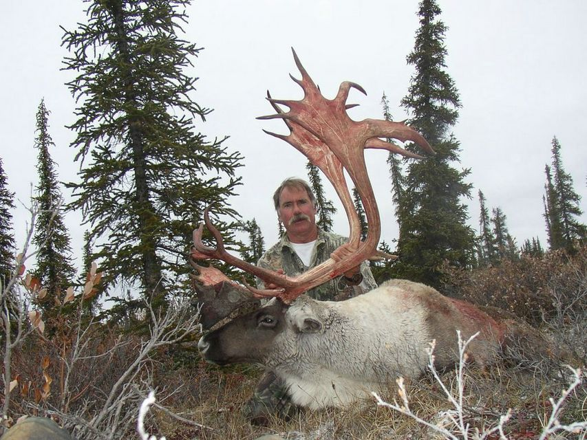 Click to view full size image  ==============  Canadian Barren Ground Caribou NWT, Canada, 2004