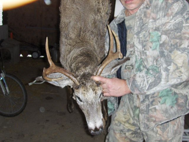 '07 Management Deer
