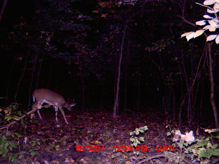Click to view full size image  ==============  Trail CAM. 07