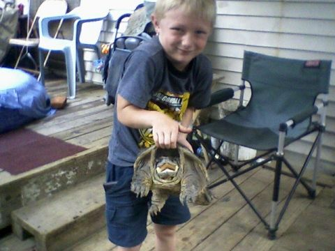 My sons first snapper My sons first snapper, it made a good stew Keywords: turtle, snapper, snaping turtle