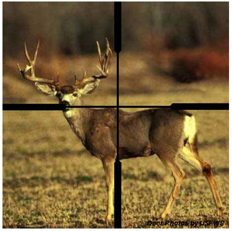 Range Estimation Most target estimation for deer size targets assumes a chest depth of 18 inches (bottom of the chest to the top of the back).