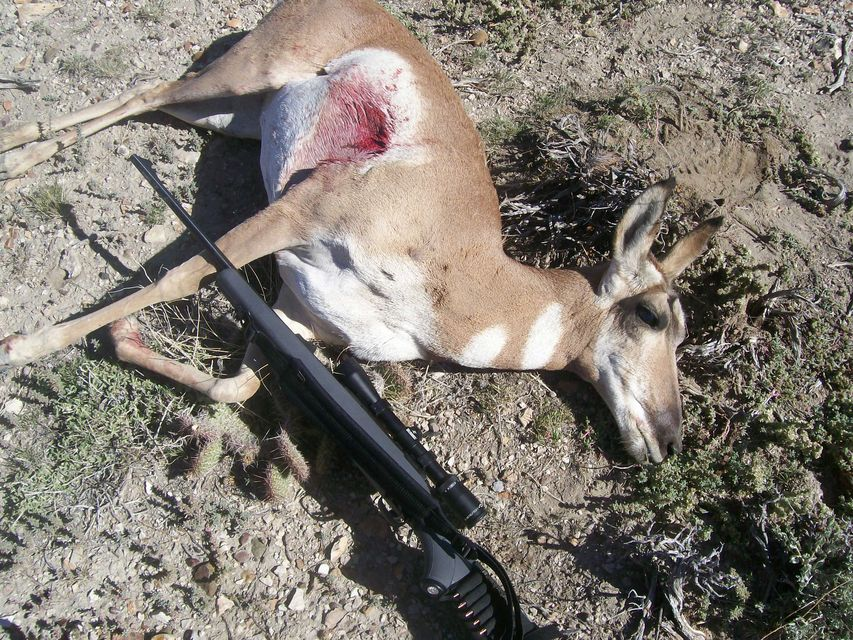 Click to view full size image  ==============  What a shot. Antelope in wyoming My first mammal i have ever shot. I shot it with my .243 in wyoming.