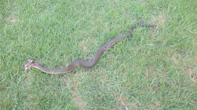 cottonmouth, well it was... (medium).jpg