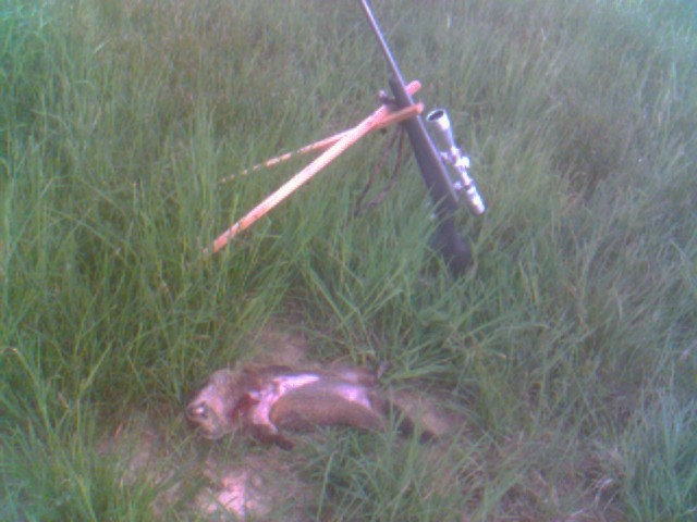 ground hog and model 7.jpg