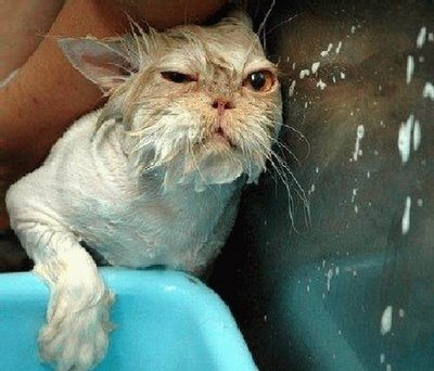 wet_pussy_cats_3.jpg